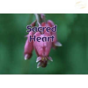 FES Flourish Spray, 30ml, Sacred Heart
