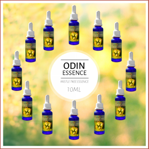 BALDRON MistleTreeEssences, Odin Set, 12x10ml