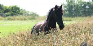 Hest & landbruk