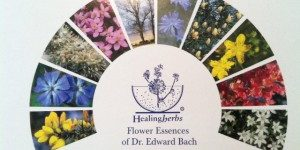 Healing Herbs (Bach)
